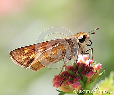 Summers Butterflies