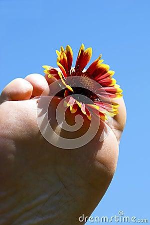 Summertime - Foot flower