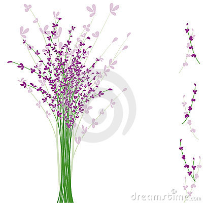 Summertime purple Lavender flower