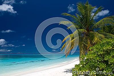 Summertime on a tropical beach
