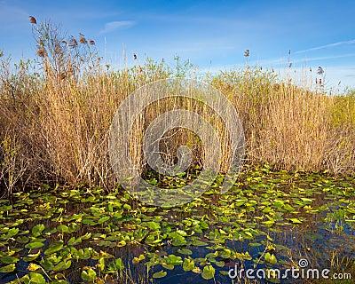 Sumpfgebiet-Teich