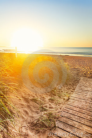 Sun bathes dunes