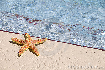Sun bathing star fish