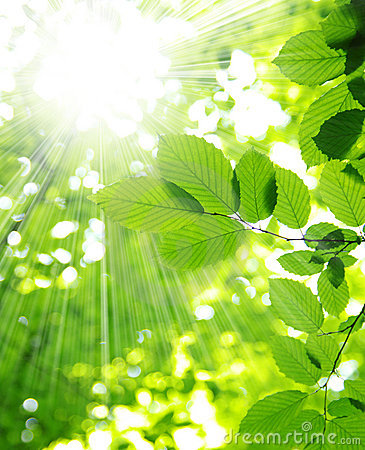 Free Sun Beams Stock Photo - 15184500