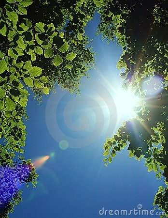 Sun beams behind tree leaves