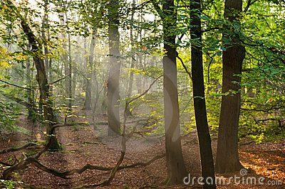 Sun Beams In The Forest Royalty Free Stock Photo - Image: 22040125