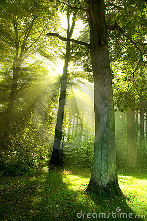 Free Sun Beams Through Trees Royalty Free Stock Photo - 6552155