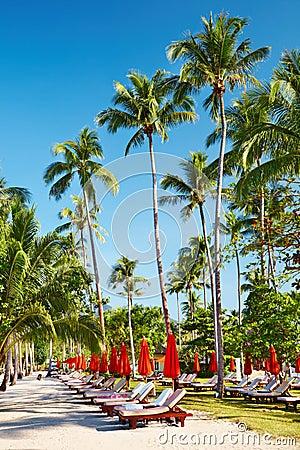 Sun beds on tropical beach