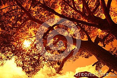 Sun behind a big tree