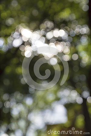 The sun behind leaves in summer Stock Photo