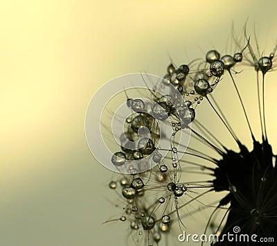 Sun blowball
