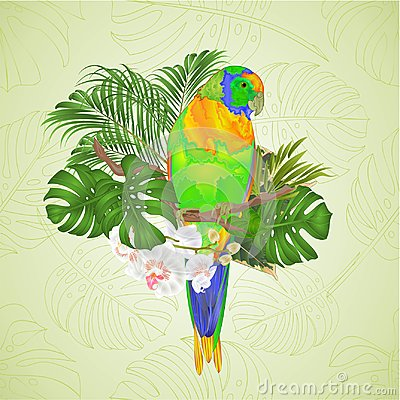 Free Sun Conure Parrot Tropical Bird Standing On A Branch White Orchid Phalaenopsis On A White Background Vector Illustration Editab Stock Images - 114585204