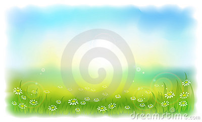 Sun-drenched meadow with daisies.