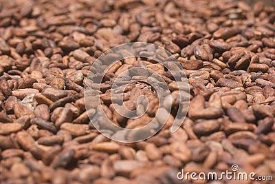 Sun-dried cocoa beans
