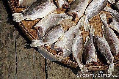 Sun Fish raw food