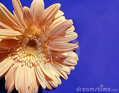 Sun-flower...(3)