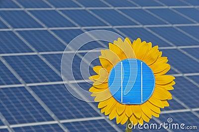 Sun flower and sun energy