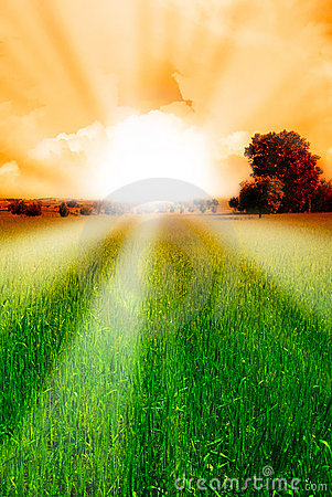 Sun and grain