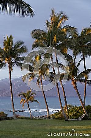 Free Sun Kissed Palm Trees Stock Photos - 28506753