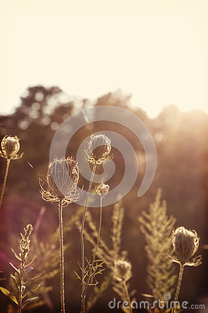Free Sun-kissed Summer Flower Royalty Free Stock Photography - 27614847