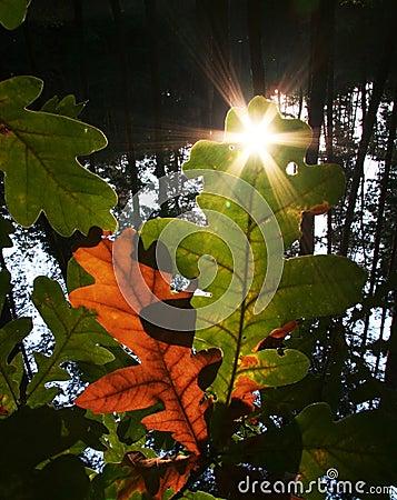 Sun for leaves