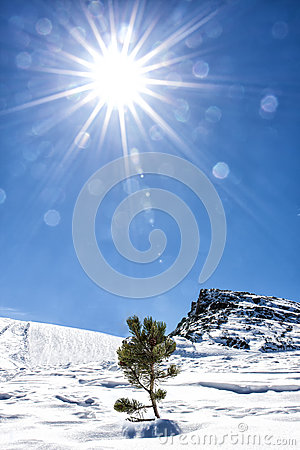 Free Sun Life Nature Snow Mountain Little Fir Tree Lonely Stock Photography - 51511382