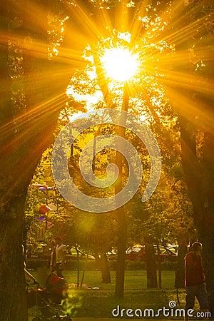 Free Sun Light Royalty Free Stock Photos - 130554088