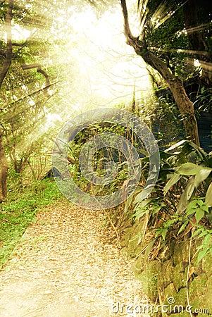 Free Sun Light Ruin Royalty Free Stock Image - 14909446
