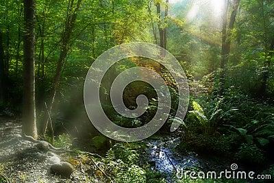 Sun light in a swamp