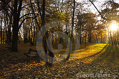 Sun lights in autumn park with bench