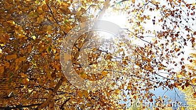 Sun mira a escondidas detrás de las hojas de otoño metrajes