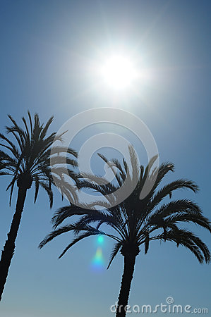 Sun and Palm Trees