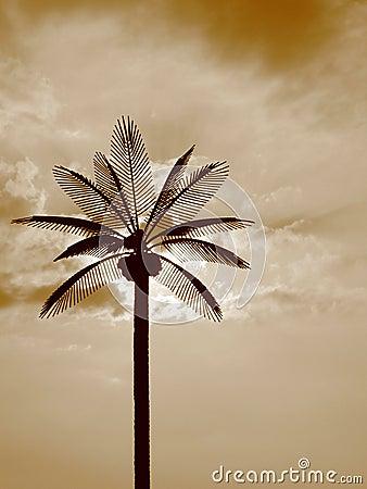 Sun Palms