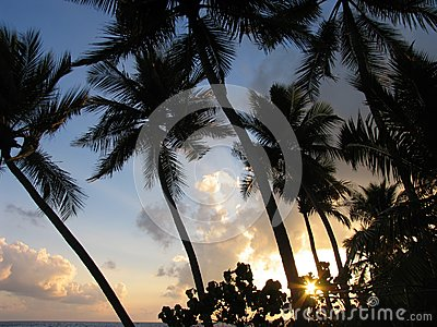 Sun raise and cocos tree