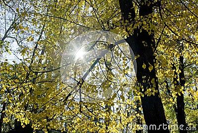 Sun rays through autumnal leaves