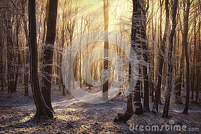 Sun rays in a frozen forest with fog