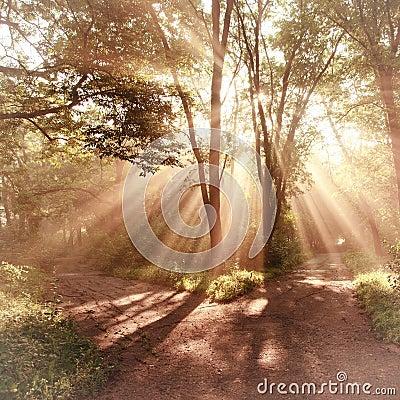 Sun rays landscape