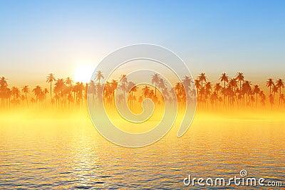 Sun rays over coconut palms