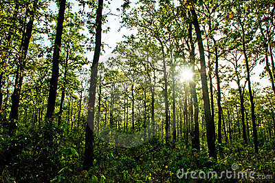 Sun rays shining in the forest
