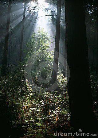 Sun rays in summer forest