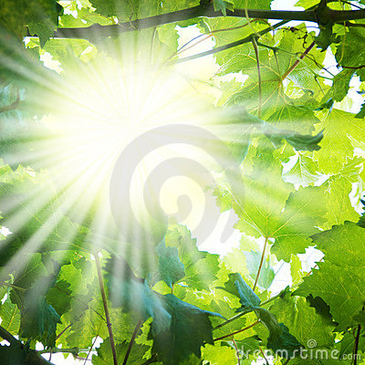 Free Sun Rays Through Tree Branches Stock Photos - 7471493