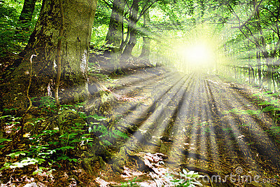 Sun rays through tree branches