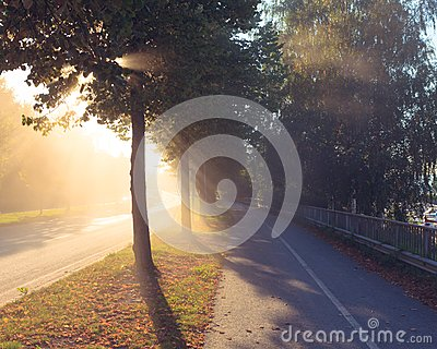 Sun rays through tree next to a road Stock Photo