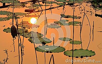 The sun reflect on lake