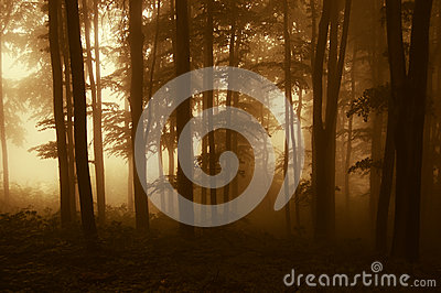 Sun rising in a dark forest with fog in autumn