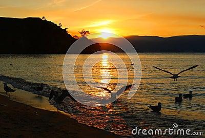 Sun seagulls