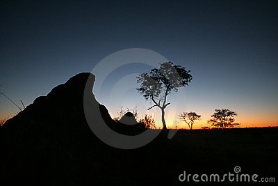 Sun setting over the African bush