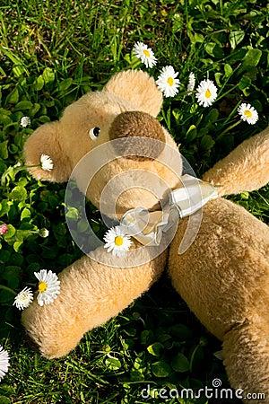 The sun shines on Teddy...