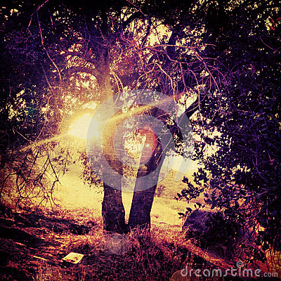 Sun shines through tree in a Surreal grungy tree haunting fantasy with saturated colors on mount rubidoux riverside california
