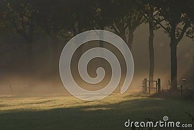Sun shining over a foggy meadow